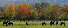 Early October in the Berkshires.