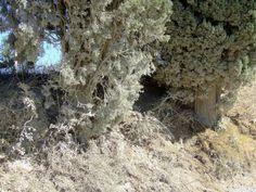 Strade di polvere