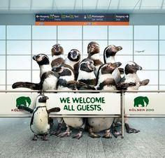 Zoo Cologne: Penguins repinned by www.BlickeDeeler.de