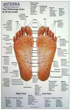 Essential Oils Foot Reflexology Chart - All About Health Essential Oil Chart, Essential Oil Diffuser Blends, Essential Oil Uses, Aromatherapy Oils, Doterra Essential Oils, Foot Chart, Reflexology Points, Foot Reflexology Chart, Wellness