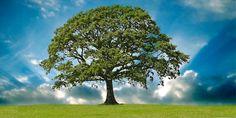 El árbol: El miedo de la madre le llegaba al niño a la garganta y sus dientes castañeteaban.  «No importa, niño».