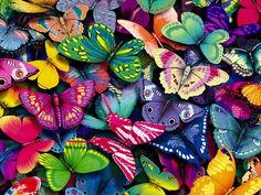 Lots of colorful butterflies - HD wallpaper - Download High Resolution Wallpaper