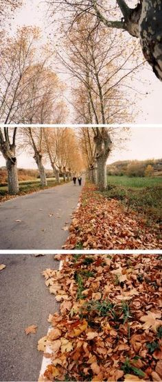 be really cool if each photo is a different season