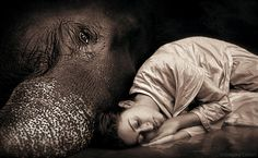 The Wise Woman Within - Image by Gregory Colbert .and what a beautiful image ! Theo Theo, Wale, Elephant Love, Wise Women, Gentle Giant, Michel, Santa Monica, Beautiful Creatures, Filmmaking