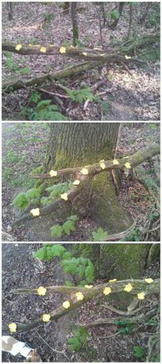 Yarn bombed tree, Valtherbos, 19 april 2014
