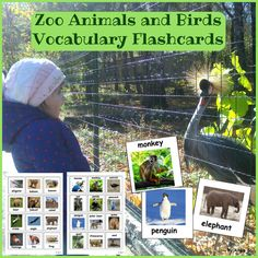 Zoo Animals and Birds Photo Flashcards for ESL, Autism, Kindergarten and preschool students. These cards will help students develop vocabulary through different matching and sorting activities and games. #zoo #zooanimals #animals #wildanimals #pecs #vocabulary #cards Kindergarten #sped #slp #tpt #teacherspayteachers