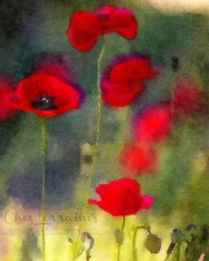 Red Poppies:  A Watercolor Fine Art Reproduction by ChezLorraines #redpoppiesfineart #watercolorprint