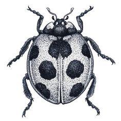 Ladybug tattoo ladybird lady beetle vector image on VectorStock Dainty Tattoos, Leg Tattoos, Black Tattoos, Body Art Tattoos, Sleeve Tattoos, Cool Tattoos, Nerdy Tattoos, Tattos, Best Tattoos For Women