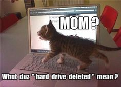 Funny Animal Pictures cat memes Just like cat funniest animals cat fun cat - Funny Cat Quotes Cute Cat Gif, Cute Funny Animals, Funny Cute, Funny Shit, Funniest Animals, Hilarious, Funny Humor, Top Funny, Funny Cat Photos