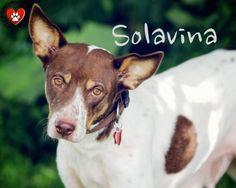 Solavina