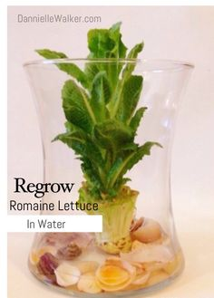 How to Regrow Vegatables in Water Sweet Potato Plant, Diy Craft Projects, Diy Crafts, Kitchen Plants, Nature Decor, Air Plants, Container Gardening, Glass Vase