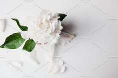 White Peony in Full Bloom by Light & Grace on White Peonies, Business Illustration, Social Media Graphics, Business Card Logo, Nature Photos, Peony, Photo Art, Floral Design, Bloom