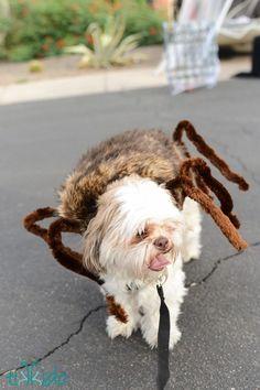 Spider Dog - WomansDay.com