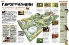 Illustration: How to plan your wildlife garden