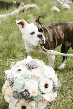 Bulldog mix and bouquet, dog of honor, wedding dog ©️️Elements of Light Photography French Bulldog Mix, Dog Wedding, English Bulldogs, Light Photography, Dog Tags, Pitbulls, Wedding Photos, Bouquet, Cute