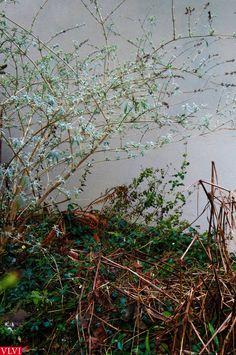 21-01 | Een ander ziet een (winterse)puinhoop. Maar ik, verliefd op mijn tuin, zie zoveel moois...