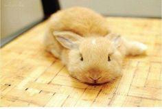 rabbit in brown