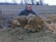 167lbs Coyote. This thing has to be part wolf.