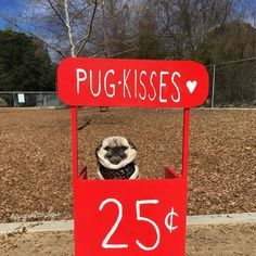Pinned T Pug A Pug With Love
