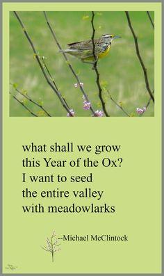 Tanka poem: what shall we grow -- by Michael McClintock.