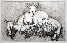 Cheviot ewe and twin lambs - Suzie Mackenzie Collagraph, varied edition of 5 - 29cm x 18cm