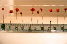 1cm intervals