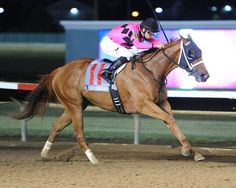 Gary and Mary West's Family Tree turned the tables on Ready to Confess and earned her first stakes win June 30, 2016 in the $200,000 Iowa Oaks (gr. III) at Prairie Meadows.
