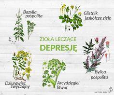 Zioła przeciwko depresji. Poznaj 5 roślin, które poprawią Twój nastrój. | NaturaRzeczy