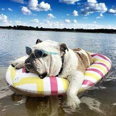 Bulldog tubing