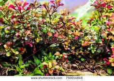 Bight colorful flowers shrub, nature background