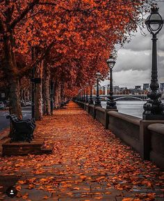 Photos Of Britain on Anyone else fancy spending Autumn in London, kicking leaves and drinking copious amounts of pumpkin spice coffee Love this by Places To Travel, Places To Visit, Beautiful Places, Beautiful Pictures, Autumn Scenes, Autumn Aesthetic, Fall Wallpaper, Autumn Cozy, Autumn Photography