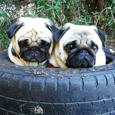 Feeling tyred