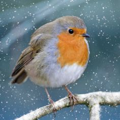 WSPA Christmas Visitor Cards | Buy from the WSPA Online Charity Gift Shop A Christmas robin puffing out his chest against the cold. All our WSPA cards carry the WSPA logo and are supplied with envelopes and printed in the UK. Greeting: With best wishes for Christmas and the New Year. Size: 137 x 137mm. 68608 10 cards £4.99 68535 30 cards £13.47 - Save £1.50! From: £4.99