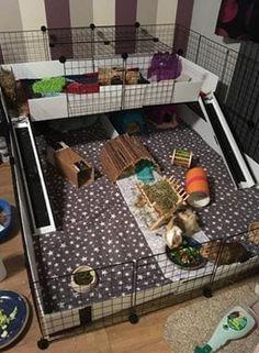 Guinea Pig Hutch, Guinea Pig House, Pet Guinea Pigs, Guinea Pig Care, Indoor Guinea Pig Cage, Cages For Guinea Pigs, Guinnea Pig, C&c Cage, Guinea Pig Accessories