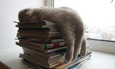 i fall asleep with my books too