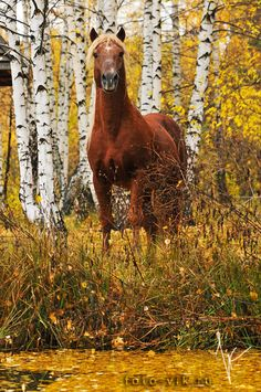 2 things I love to see -- horses and fall leaves! Autumn Scenes, Horse Pictures, Horse Photos, Equine Photography, Horse Farms, Horse Love, Animals Of The World, Wild Horses, Horseback Riding