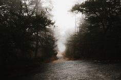 Forest wallpaper Sky, nature and atmospheric phenomenon – – buy in store Forest Wallpaper, Photo Wallpaper, Spooky Places, Haunted Hotel, Travel Advice, Ciel, Natural World, Free Pictures, Free Images