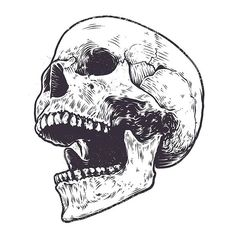 Illustration about Anatomic Skull Vector Art. Detailed hand-drawn illustration of skull with open mouth. Illustration of hand, white, grunge - 84642066 Skull Open Mouth, Open Mouth Drawing, Skull Reference, Skull Illustration, Skull Design, Skull Tattoos, Skull And Bones, Character Drawing, Skull Art