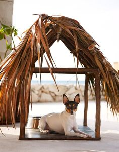 A pet palapa made of palm grass and wood makes for a perfect pet vacation at Viceroy Riviera Maya.