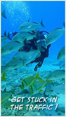 Immerse yourself in the Playa del Carmen and the Mayan world through the spectacular scuba diving and snorkeling