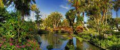 jardin botanico puerto de la cruz - Buscar con Google