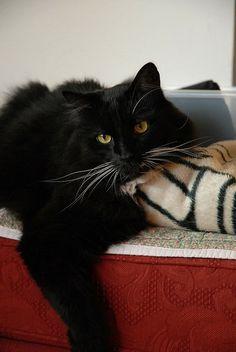 Black cat   Leonardo DiCatio
