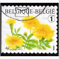Belgium 2008 Flowers (54c) Multicoloured SG4174 FU