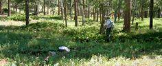 NPS Volunteer Stephanie Mason looks for butterflies in a forest