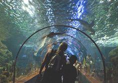 #Tiburones #LoroParque, #TENERIFE #IslasCanarias