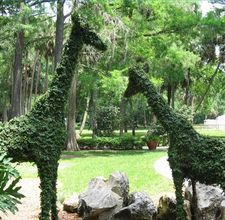 how to make your own topiary form