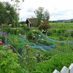 Mias Landliv: The potager... and more