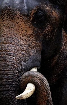 I adore elephants. This is such a serene photo.