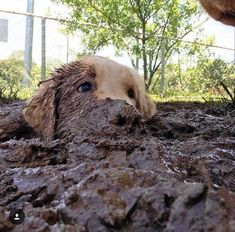 Who doesnt like playing into the mud!? http://ift.tt/2GmPhdn