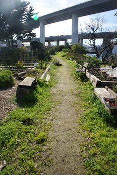 Mission Creek Community Garden in San Francisco